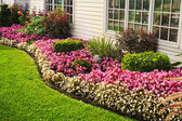 Giardino di fiore colorato — Foto Stock