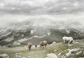 Wild horses grazing — Stock Photo