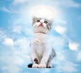 Cat in heaven — Stock Photo