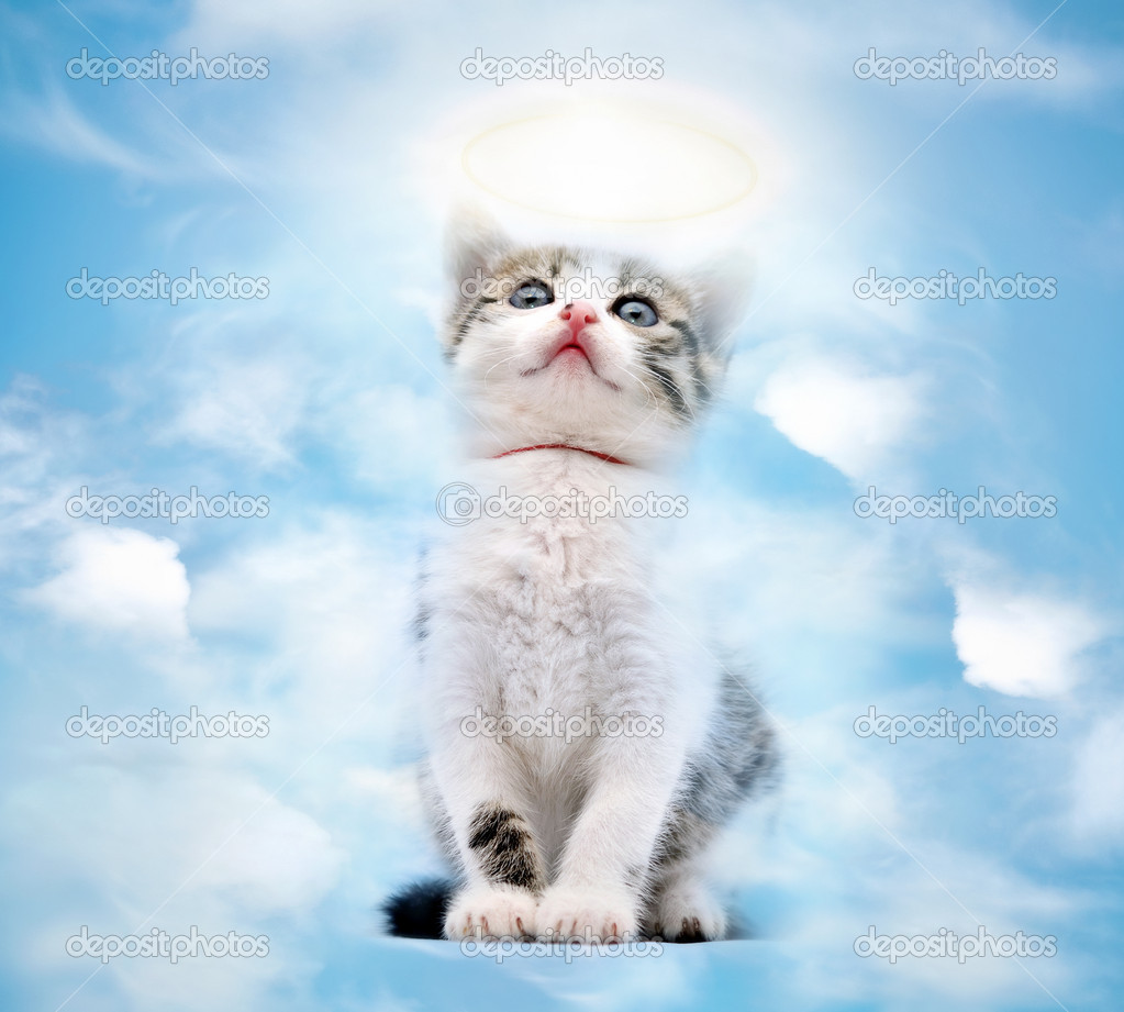 Young kitty goes to heaven  Stock Photo #9083698