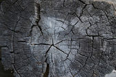 счет-фактура дерева — Стоковое фото