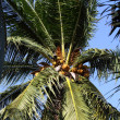 Coconut tree in the sky - Stock fotografie