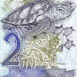 Sea turtle on 2 Real banknote from brazil - Zdjęcie stockowe