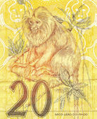 Golden lion tamarin (Leontopithecus rosalia) in 20 Real brazilian money bill — Stock Photo