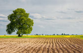 Rural landscapes are plowed field — Stock Photo
