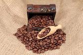 Coffee beans — Стоковое фото