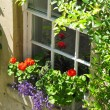 Flowers at a window — Stock Photo