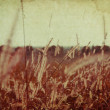 Abstract vintage nature background — Stock Photo