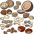 Nuts icon set — Stock Vector