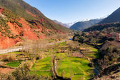 Ourika valley green fields — Stock Photo