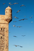Seagulls over Essaouira fort — Stock Photo