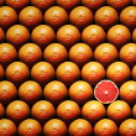 Постер, плакат: Grapefruit slice between group