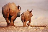 Black Rhinoceros baby and cow — Stock Photo