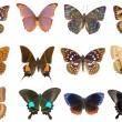 Butterfly set collection — Stock Photo #8478008