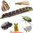 Insects set collection — Stock Photo #8478026