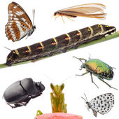 Insects set collection — Stock fotografie