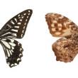 Butterfly collection — Stock Photo #8493133