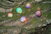 Painted in snail shell — Stockfoto