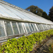Greenhouse perspective - Stockfoto