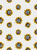 Naadloze zonnebloemen — Stockfoto