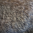 Animal Fur - Stockfoto