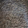 Fur background - Stockfoto
