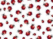Ladybirds — Stock Photo