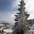 Stock Photo: Winter landscape with snow in mountains Carpathians
