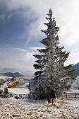 冬季景观与雪在喀尔巴阡山 — 图库照片