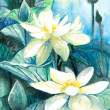 Stock Photo: White lotus