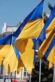 Государственные флаги Украины — Stock Photo