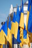 Флаги Украины — Stock Photo
