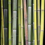 Бамбуковый фон — Stock Photo