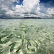 Transparent sea water - Stock Photo