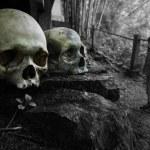 Bones — Stock Photo #8148710