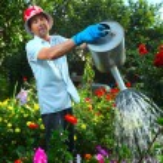 Man watering his garden — Stock Photo