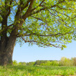 Tree — Stock Photo #8149469