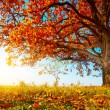 Autumn oak — Stock Photo #8149645
