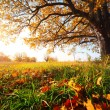 Autumn oak — Stock Photo #8149748