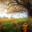 Autumn oak — Stock Photo #8149773
