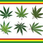 cannabis — Stockfoto