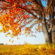 Autumn oak — Stock Photo #8149817