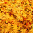 Autumn leaves — Stock Photo #8149995