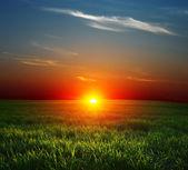Pôr do sol sobre o campo — Foto Stock