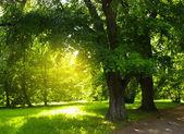 πάρκο — Φωτογραφία Αρχείου