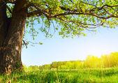 Baum — Stockfoto