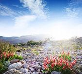 Flowers ion rocky meadow — Stock Photo