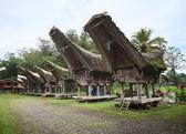 Toraja — Stock Photo