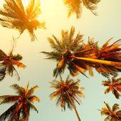 Bäume — Stockfoto