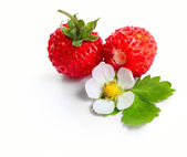 Berry — Stock Photo